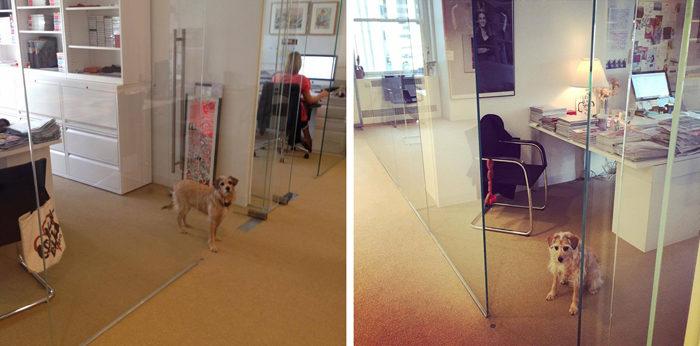 the-wow_sophie-und-tompkin-in-der-fashion-metropole_instyle-office-dog