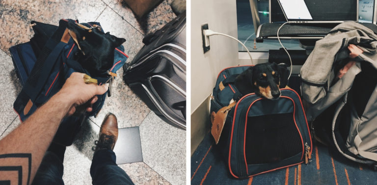 the-wow_the-guy-who-dedicates-a-book-to-his-dachshund_travelling