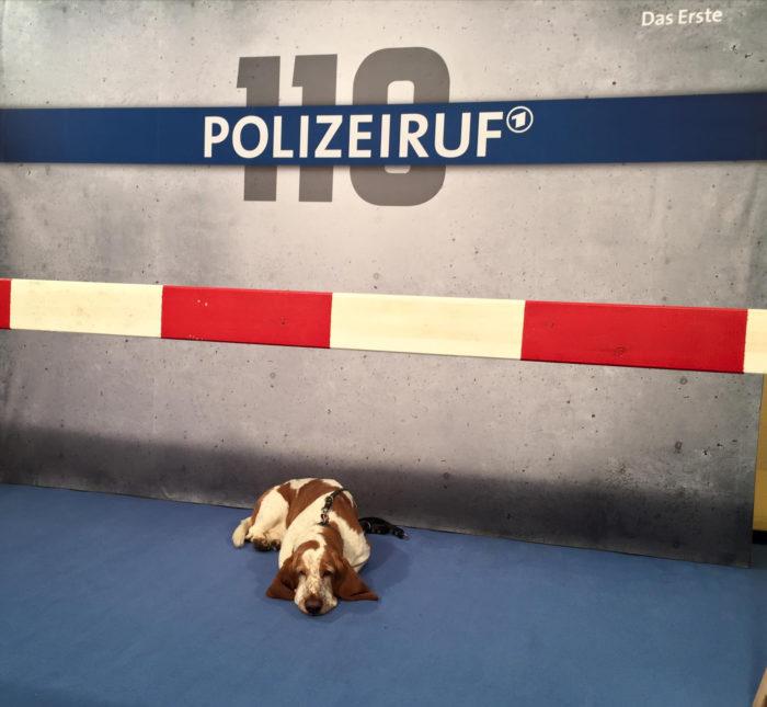 the-wow_zwei-schlappohren-erobern-die-hauptstadt_polizeiruf